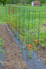 Vegetable Cages For Vertical Gardening