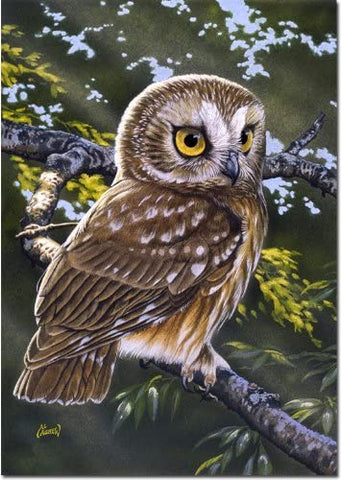 Garden Flag-Saw-Whet Owl