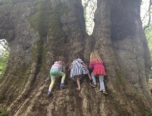 girls climbing trees big tree