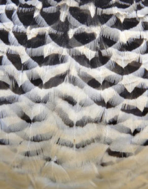 Ashbury Feather Collection