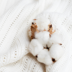 Cotton plant with white scarf
