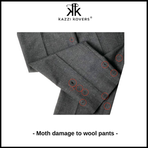 Suit pants with moth damage