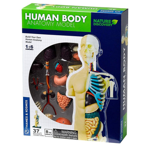 Human Body Anatomy Model Kit
