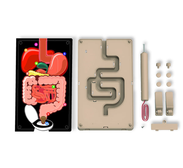 Kidz Labs Digestive System Buzz Wire game