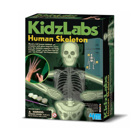 Kidz Labs Human Skeleton kit