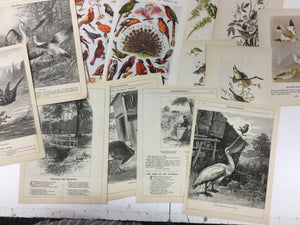 Bundle of Vintage Illustrated Book Pages-Red Barn Collections