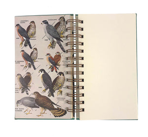 A Field Guide to the Birds-Red Barn Collections