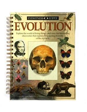 Evolution-Red Barn Collections