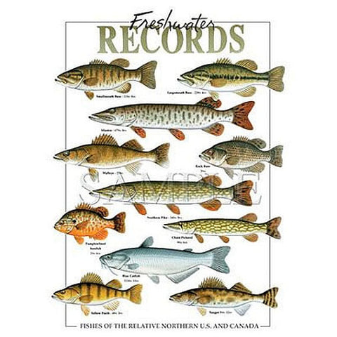 Fishing T Shirt Record Freshwater Fish Caught in North US and Canada Adult Unisex T Shirt 05638HL2