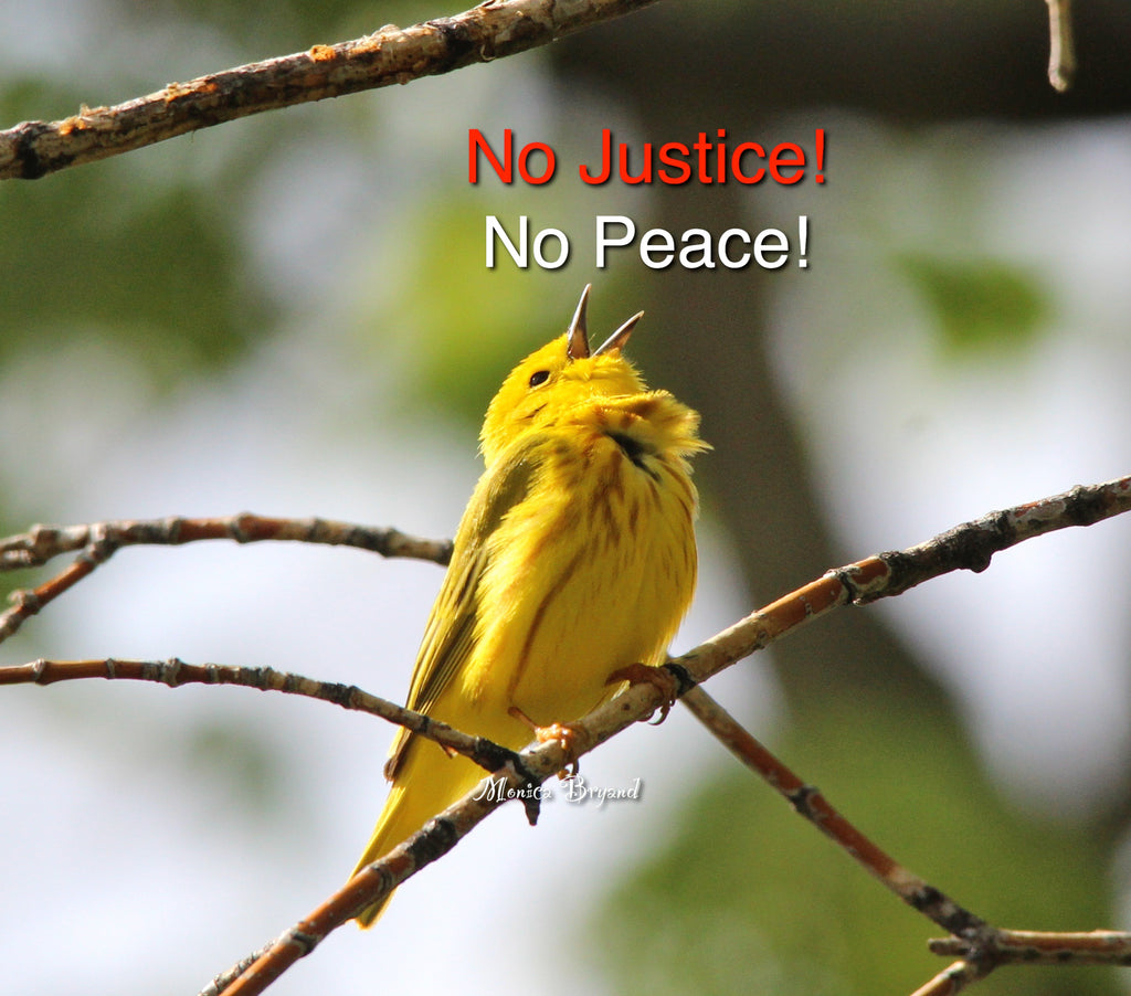 Yellow Warbler #1 - No Justice- No Peace