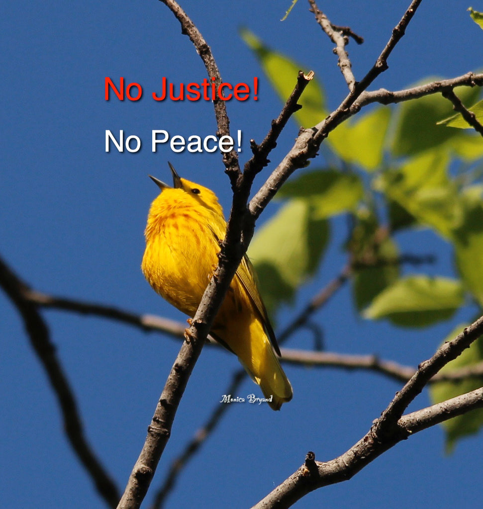 Yellow Warbler #2 - No Justice- No Peace