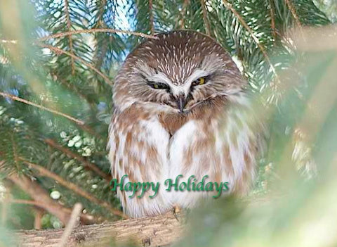 Happy Holidays - Northern Saw-whet