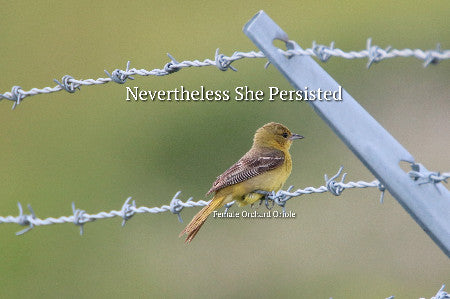 Female Orchard Orieole- Nevertheless She Persisted