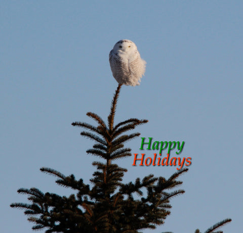 Happy Holidays - Snowy Tippy