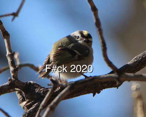 Golden Crowned Kinglet - F#ck 2020