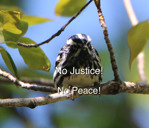 Black & White Warbler - No Justice- No Peace