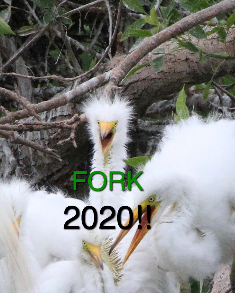 Baby Great Egret - Fork 2020