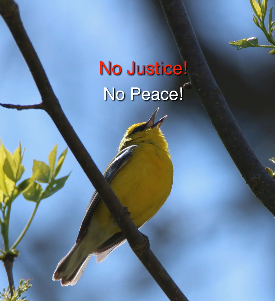 Blue-winged Warbler - No Justice- No Peace