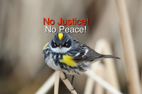 Yellow-rumped Warbler - No Justice- No Peace
