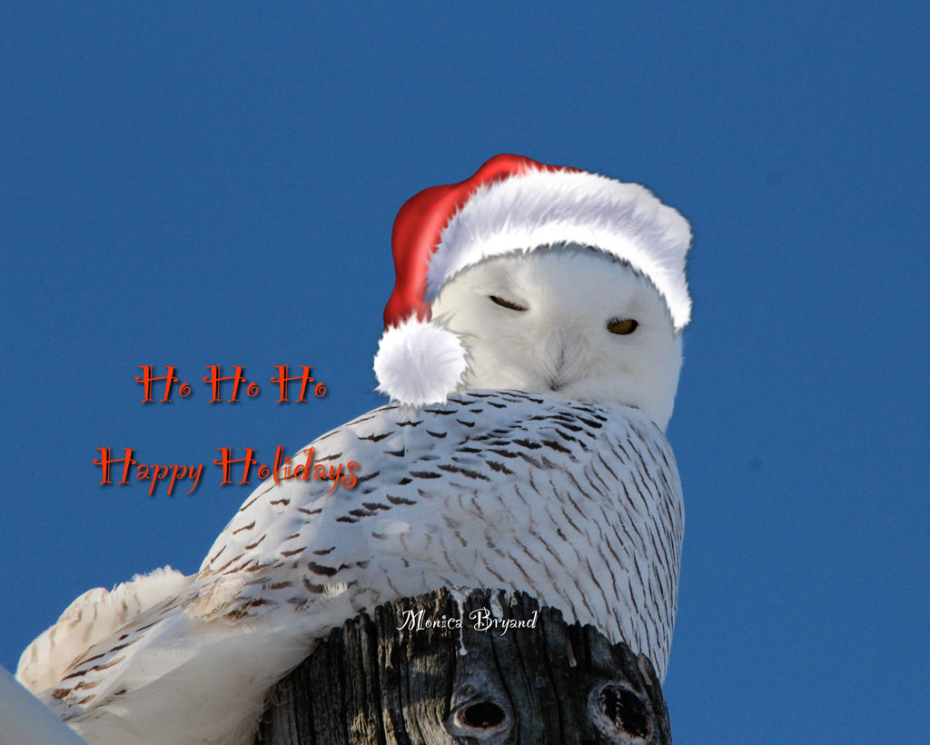 Happy Holidays - Snowy Owl