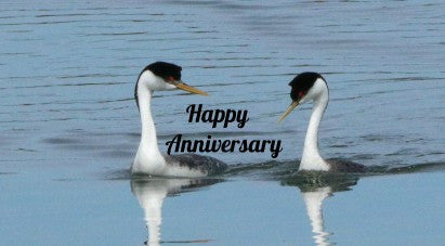 Grebes (western) - Happy Anniversary