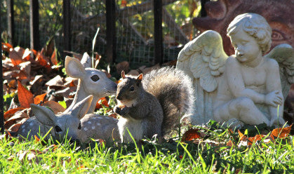 Grey Squirrel- Just Like Heaven