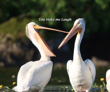 Baby Pelicans- You Make me Laugh