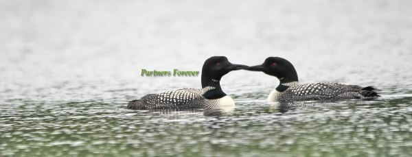 Loons- Partners Forever!