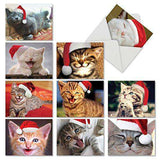 Christmas Smitten Kittens Notes - Santa Caps Assorted Christmas Cats - Greeting Cards - Free Shipping