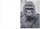 Dicks Out For Harambe The Gorilla Love Anniversary and Valentine's Day Card (PLAYS MEME SOUND)