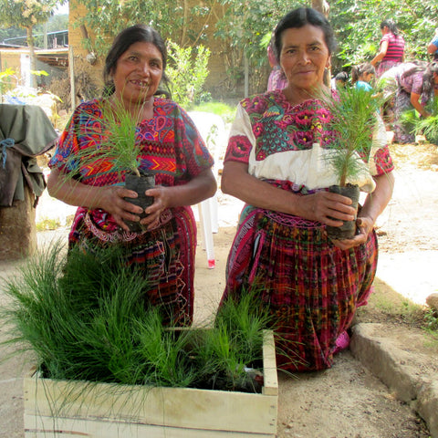 Mayan artisans with pine saplings at tree blessing ceremony