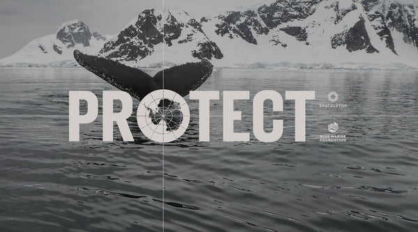 Join the fight to protect Antarctica