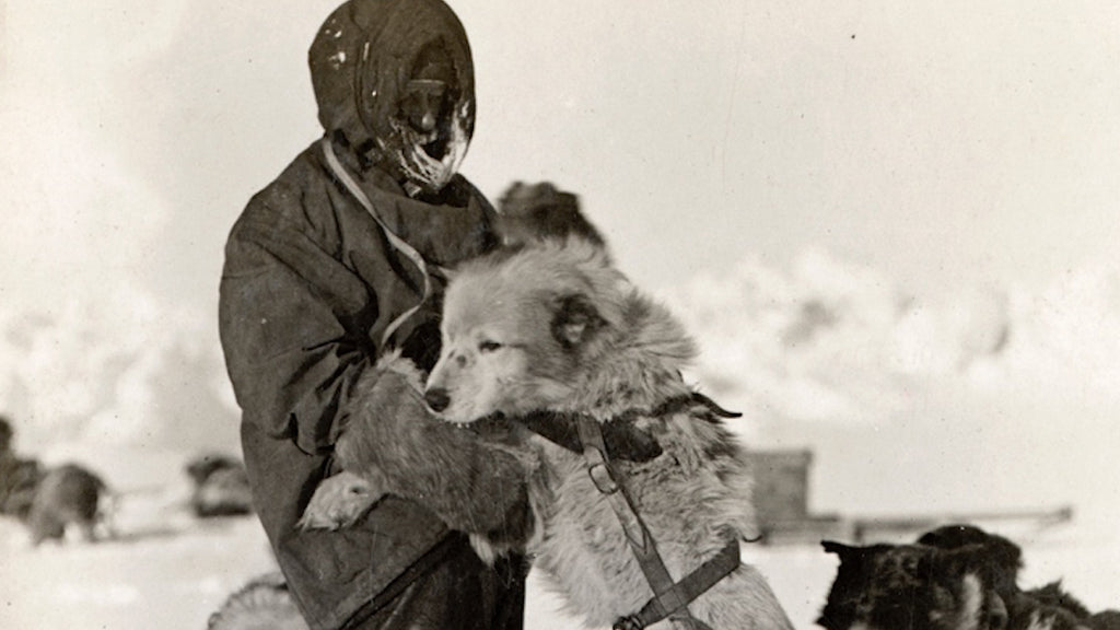 Polar Explorer And Sled Dog