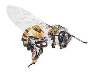 Honey Bee Giclee Print