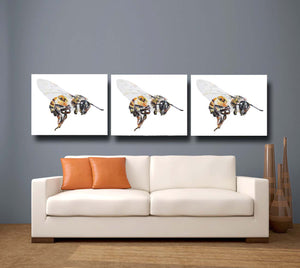 bee, bee print, bee gift, honey bee, honey bee print, honey bee gift idea