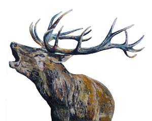 Bellowing Stag 'Fraser' Giclee Print