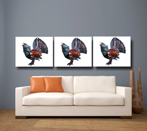 capercaillie, capercaillie print, capercaillie gift, shooting gift, country gift, outdoor gift