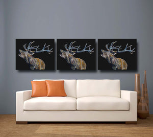 Bellowing Stag 'Fraser' Giclee Canvas Print Black
