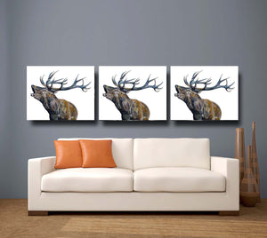 Bellowing Stag 'Fraser' Giclee Canvas Print