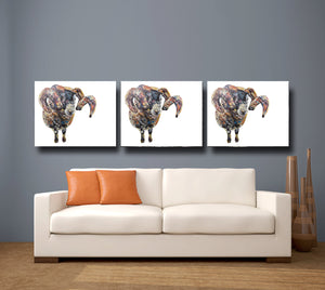 Black Faced Sheep 'Goseland' Giclee Canvas Print