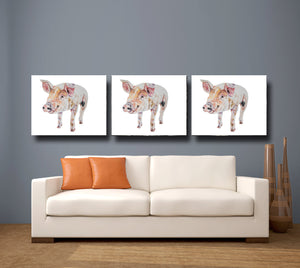 Gloucester Old Spot Piglet 'Jim' Giclee Canvas Print