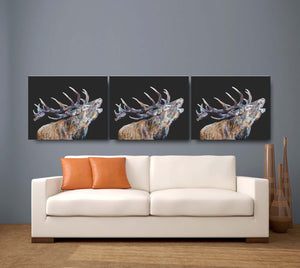 Bellowing Stag 'Murdo' Giclee Canvas Print Black