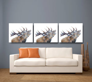 Bellowing Stag 'Murdo' Giclee Canvas Print