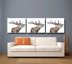 Bellowing Stag 'Braidwood' Giclee Canvas Print