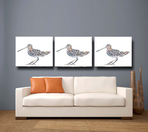 Woodcock 'Timberdoodle' Giclee Canvas Print