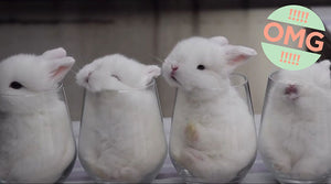 Bunnies In A Cup ... So Cute It Hurts