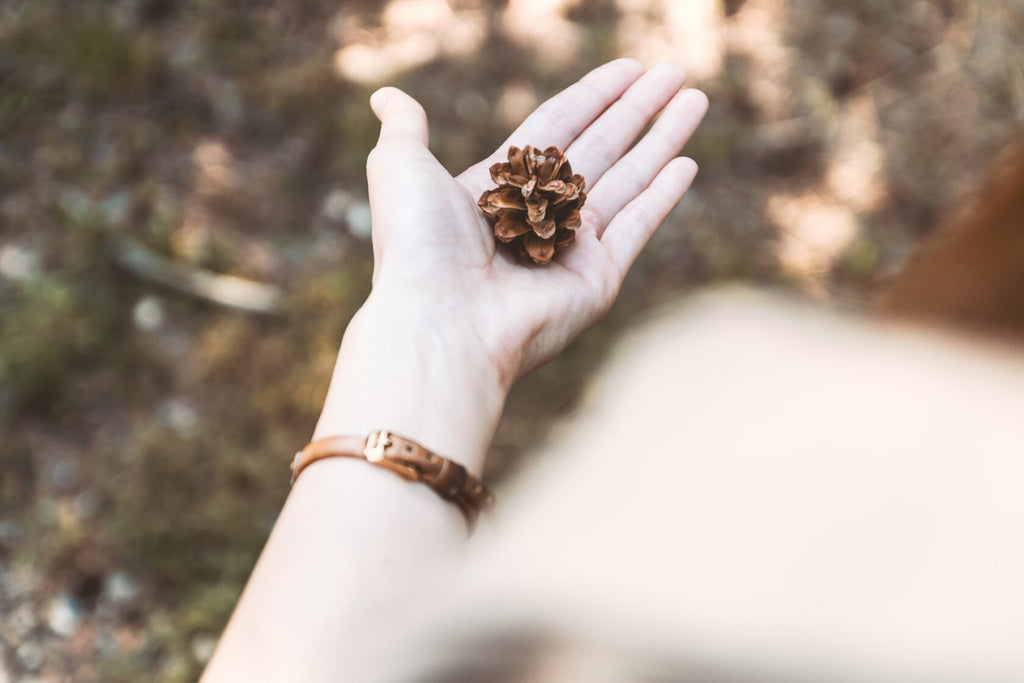 Pine Cone on a woman´s hand