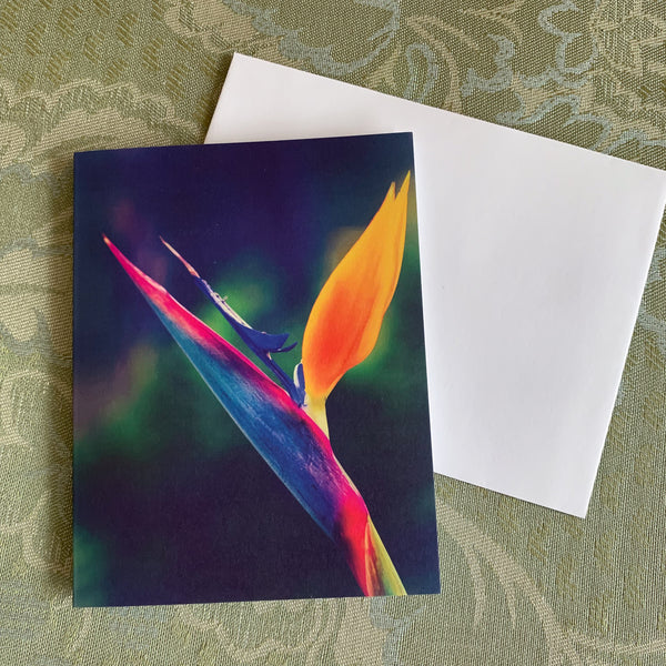 https://jademoonphotography.com/products/taking-flight-note-cards