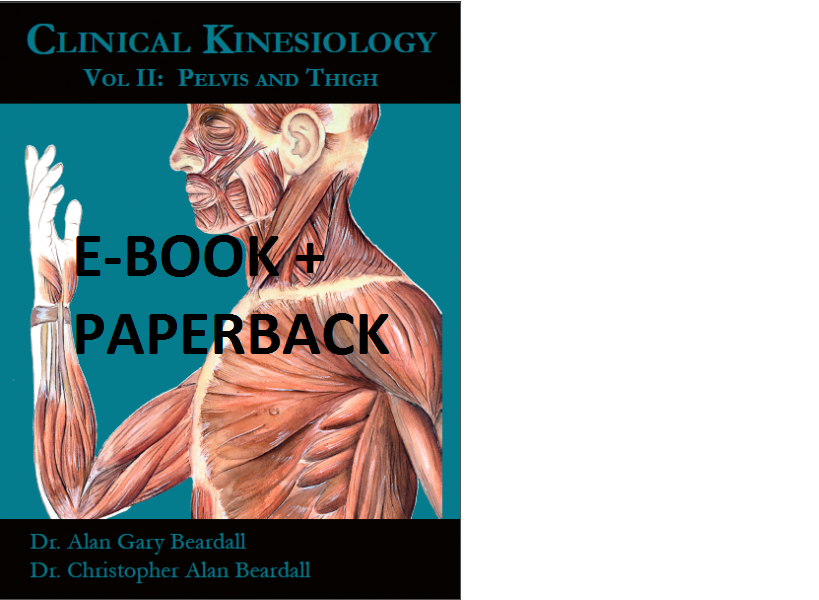 2b Clinical Kinesiology Volume Ii Muscles Of The Pelvis And Thigh
