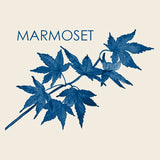 Vinyl Box Set - Marmoset - Joyful Noise Recordings - 1